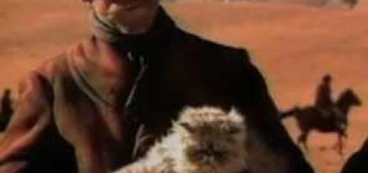 Cat-Herder