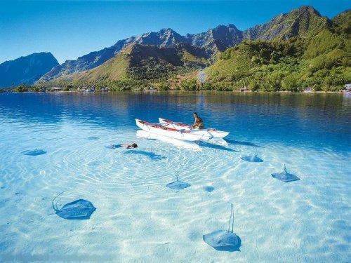 Bora Bora Stingrays