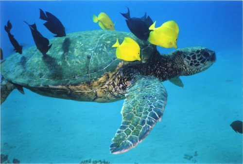 Fish on Turtle